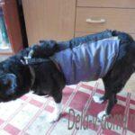 Собака в зимней попоне